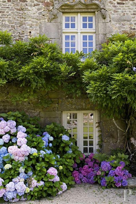 hydrangea garden design garden design pinterest