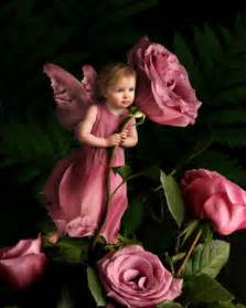 baby rose fairy just for you yorkshire rose photo 22244061 fanpop