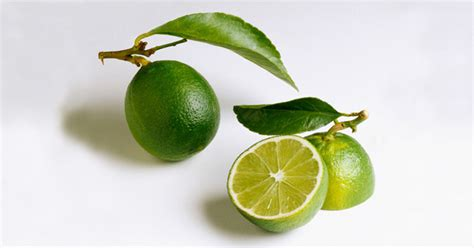 can dogs limes lime aspca