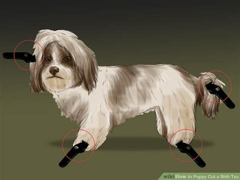 how to trim shih tzu shih tzu puppy haircuts haircuts models ideas
