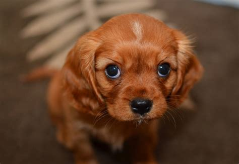 adorable puppies and kittens kittens and puppies galore we rule the
