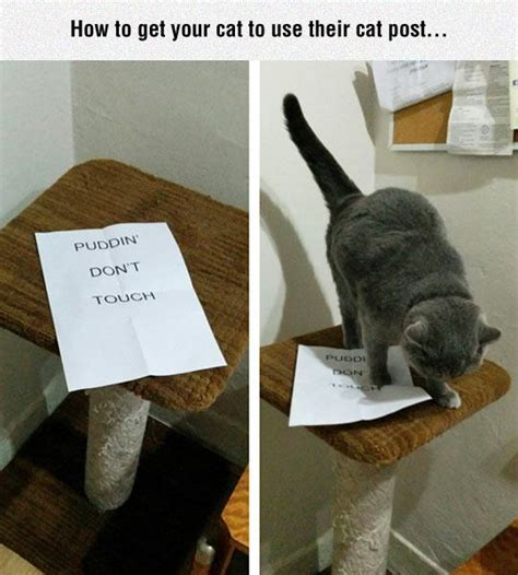 how to get your cat to stop scratching the couch funny pic dump 9 7 14 pleated jeans