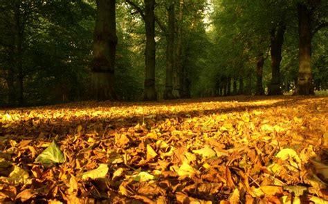 wallpaper daun resolusi tinggi musim gugur daun hd wallpaper desktop lebar definisi