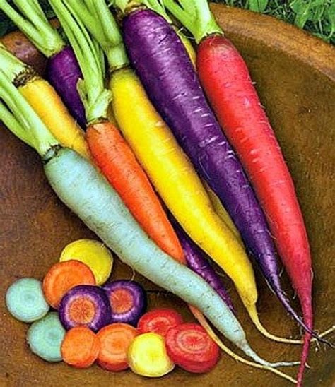 original color of carrots rainbow carrot mix seven fancy heirlooms 350 seeds by