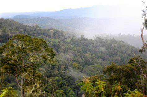 Drone Buat Foto mongabay travel petualangan menuju seko leuser conservation partnership