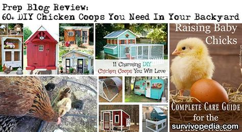 raising chickens for eggs in your backyard raising chickens for eggs in your backyard chicken