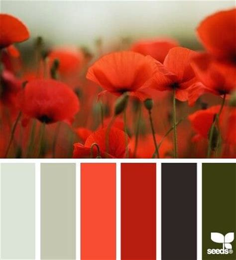 poppy colors from design seeds to paint flowers