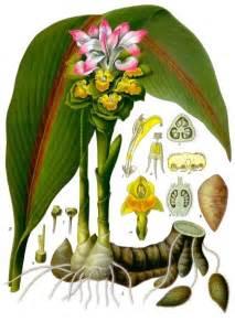 растения в разрезе в картинках