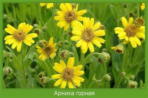 горное растение занесенное в красную книгу казахстана