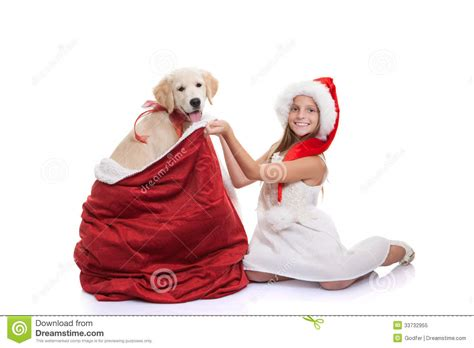 christmas holiday pet dog gift stock image image 33732955