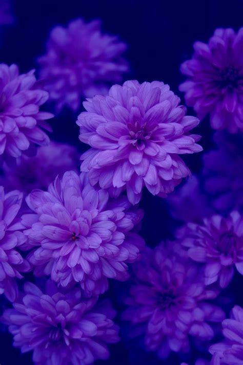 Sprei Lavender Violet No 1 Fata 17 best images about color purple lavender on