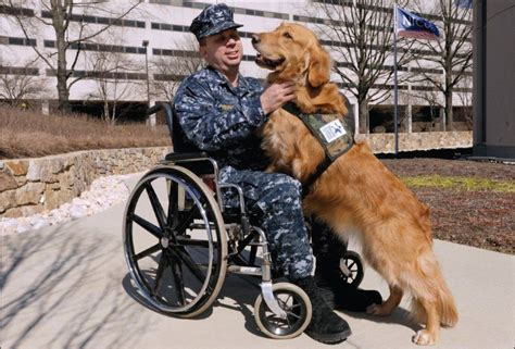 ptsd therapy dogs the of service in the treatment of