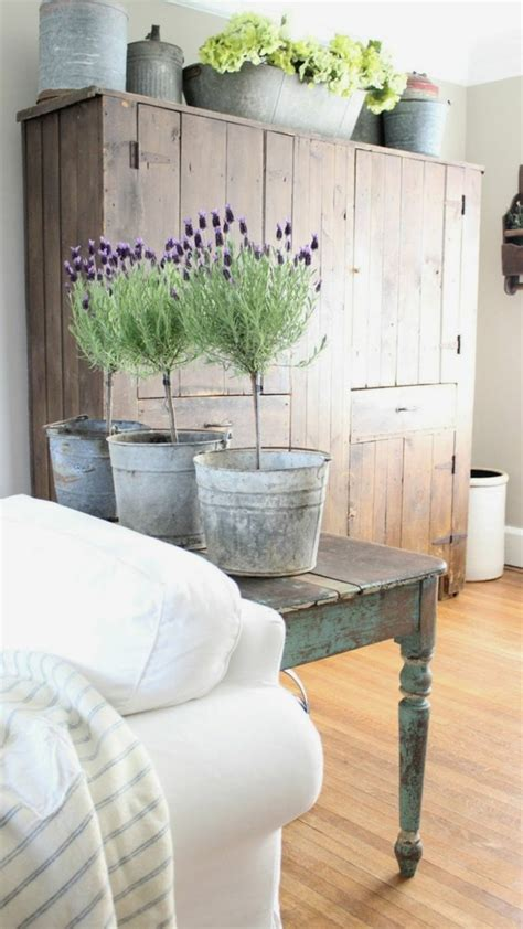 lavendel als zimmerpflanze zimmerpflanzen arten bilder den beliebtesten