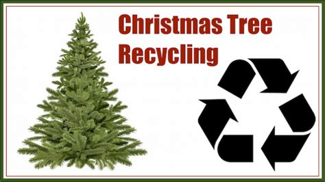 christmas tree recycle unihack co