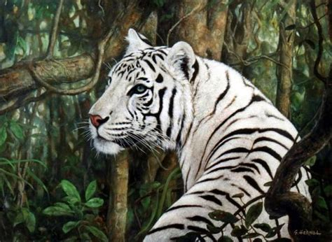 google images tiger white tiger google search cat crazy pinterest