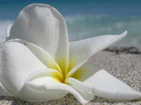 i fiori mare fiori di mare profumo ambienti specialscent europe