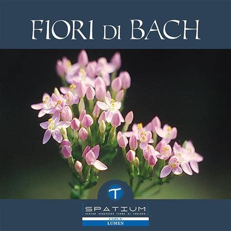 fiori di bach on line test fiori di bach test fiori di bach fiori di bach test