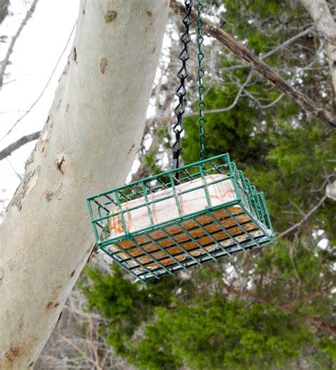 Busy Feeder where to hang a suet feeder birdseed binoculars