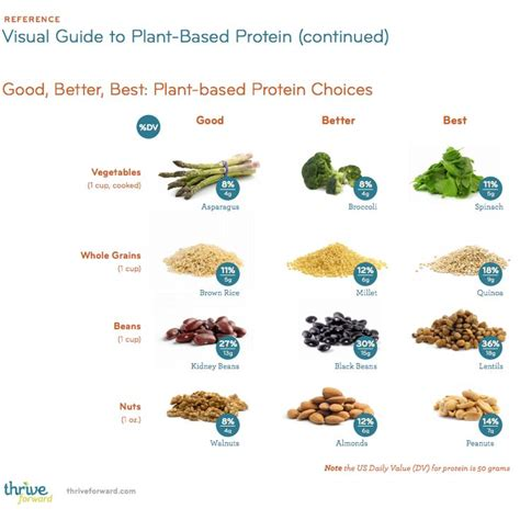 p protein in plants 25 best ideas about precision nutrition on