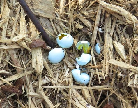 house sparrow eggs monday recap crunchy and seeded our happy acres