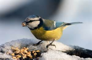 how do birds chew their food natural world of living things
