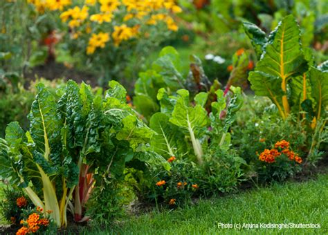 Edible Landscaping how to create an edible landscape for your home