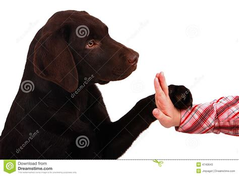 puppy high five puppy high 5 stock photos image 4740643