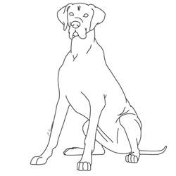 great sheets great dane coloring pages coloring home