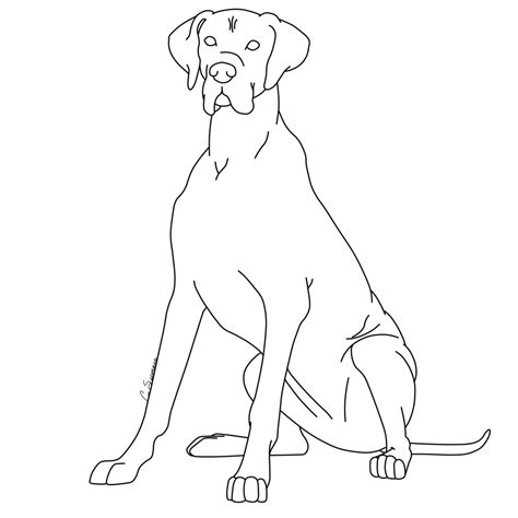 Great Dane Coloring Pages great dane coloring pages coloring home