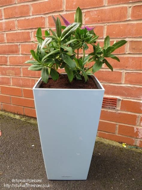 self watering planter self watering planter from lechuza et speaks from home