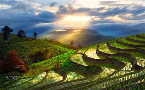 Free Online Architecture Design beautiful rice field by chatrawee wiratgasem on 500px