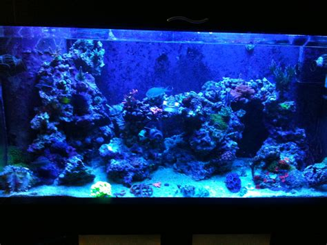 Saltwater Aquascaping by Why I Involuntarily Re Did Aquascaping Mr Saltwater Tank
