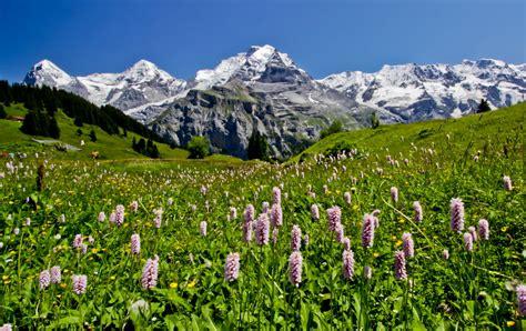 Medieval Home Decor Ideas by Wild Flower Field Of Switzerland Spring Outdoor Tourism