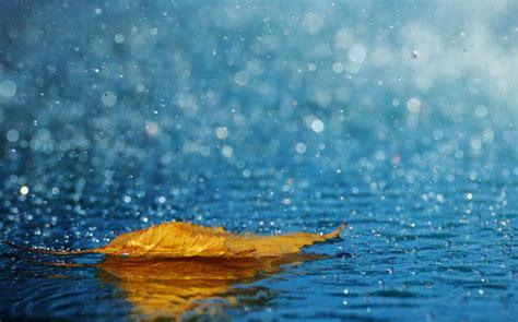 background hujan 25 wonderful photographs of rain