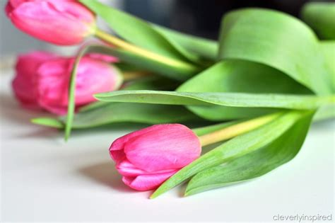 tulips or roses for valentines when quot two quot meet tulip cleverly inspired
