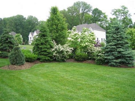 Backyard Tree Ideas by Privacy Berms Gardening Planters And Driveways