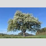 Spring Flower Backgrounds | 960 x 640 jpeg 257kB