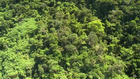 Canopy Definition Rainforest Aerial View Mangrove Forest In Krabi Province Thailand