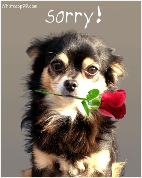 sorry puppy images pictures