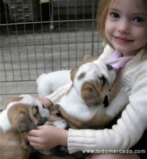 free puppies in nh pets new hshire free classified ads