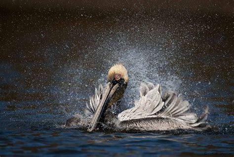 creative ways  drastically improve  wildlife