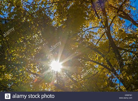 Canopy Of Leaves tree canopy sun leaves stock photos tree canopy sun