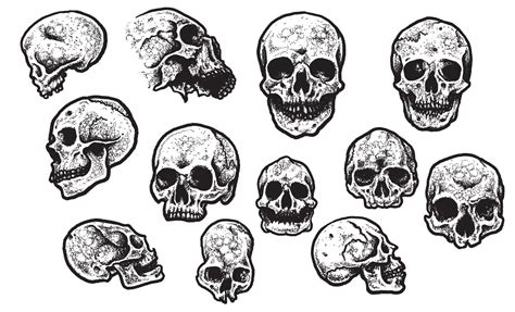jeff finley s skull vector pack for go media