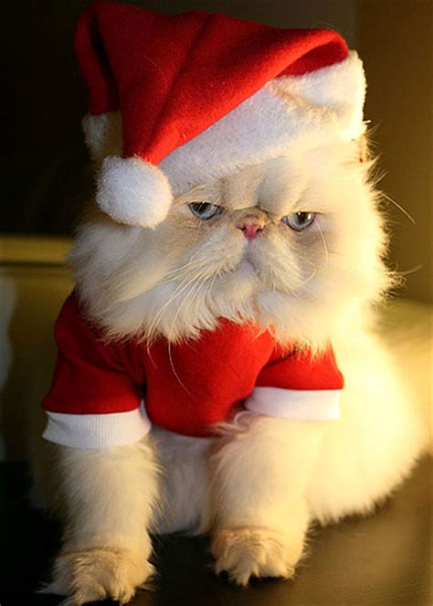 images of christmas animals funny animals cute christmas animals