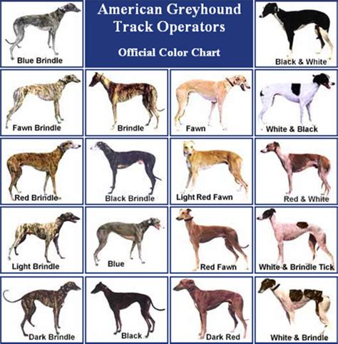 greyhound colors palm kennel club a covering a variety of