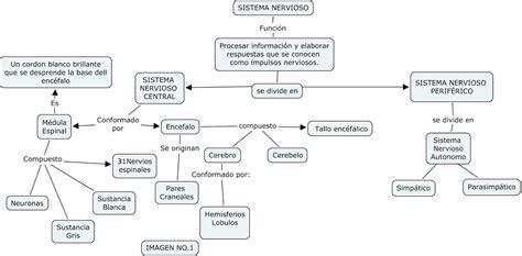 mapa conceptual del sistema nervioso cuadro 1 newhairstylesformen2014 com