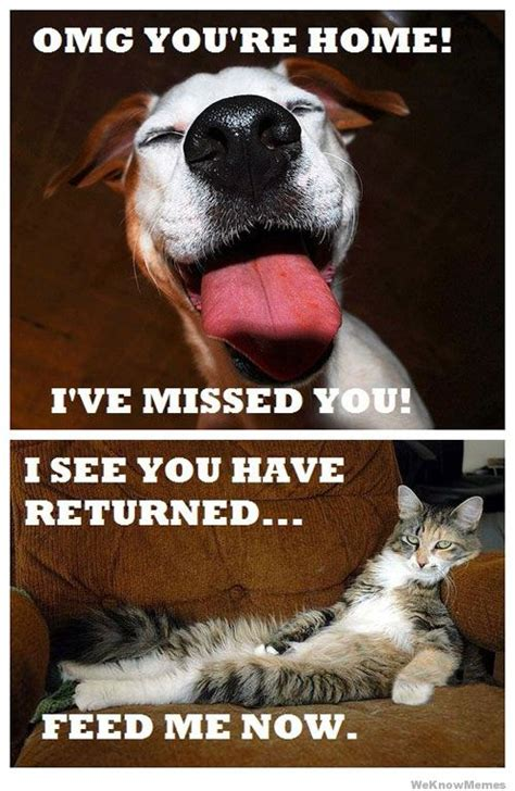 Funny Dog And Cat Memes - dogs vs cats weknowmemes
