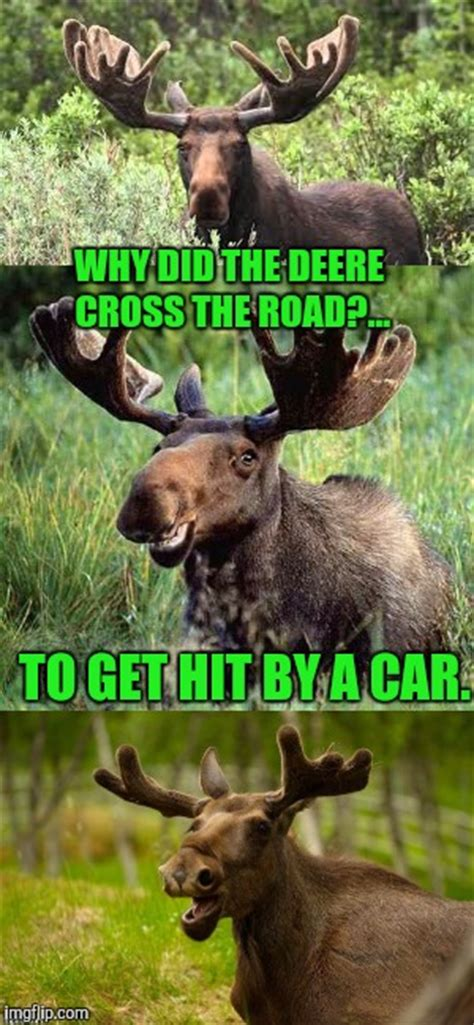 Moose Meme - bad pun moose its that time of year folks deer season