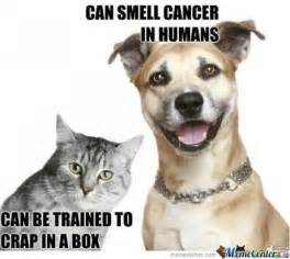 Cat And Dog Memes - dog vs cat by dacookiemonster meme center
