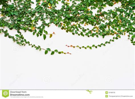 Free House Building Plans vine growing on the white wall royalty free stock photo
